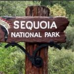 <b>Sequoia park01</b> <br />